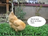 henry_the_headless_chicken_-_chicks_dig_grass_too.jpg